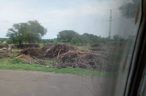 Article : Journée mondiale de lutte contre la désertification, le Nord ivoirien se fabrique son propre désert.